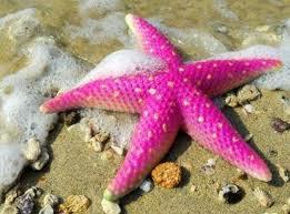 Морская звезда. А есть ли  лицо у морской звезды?Откуда же взяться лицу, если у нее даже нет головы?